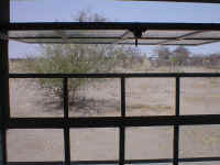View of my classroom window.  The traditional homestead is a little difficult to see, but it is to the right, behind the termite mound.