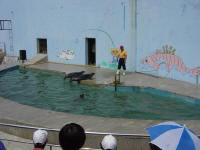 seals at Dalian Zoo